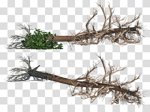 Uprooted tree clipart svg freeuse library 1,398 Fallen transparent background PNG cliparts free ... svg freeuse library