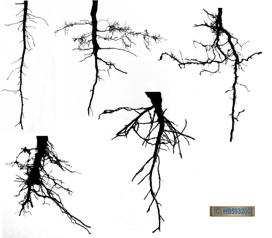 Uprooted tree clipart transparent library Tree Trunk Drawing clipart - Tree, Leaf, Plant, transparent ... transparent library