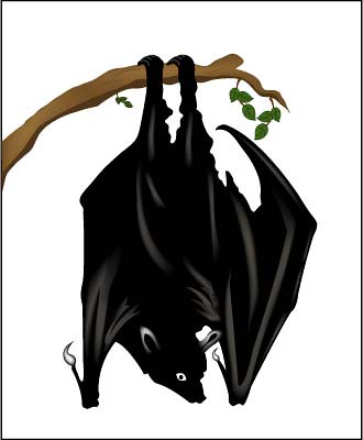Upside down bat clipart vector stock Bat Hanging Upside-Down | Black and white drawing of a bat h ... vector stock