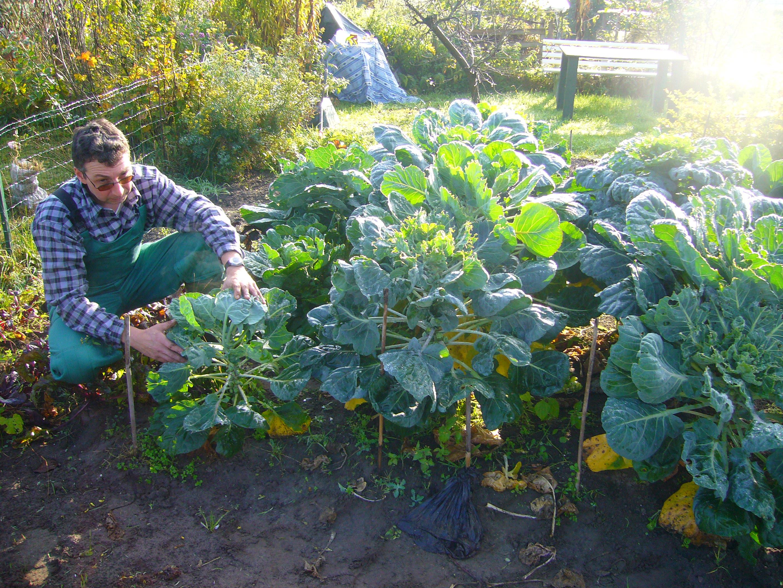 Urban garden clipart jpg Urban gardening with waste water in Zimbabwe (Willem Van ... jpg