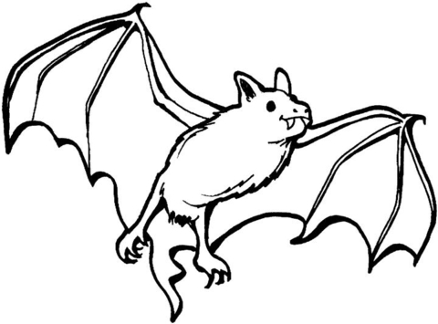 Vampire bat outline clipart graphic royalty free Vampire bat coloring page | Free Printable Coloring Pages graphic royalty free