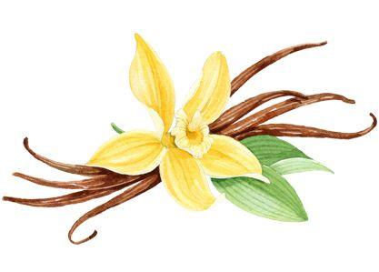 Vanilla bean clipart banner library download Free Vanilla Cliparts, Download Free Clip Art, Free Clip Art ... banner library download