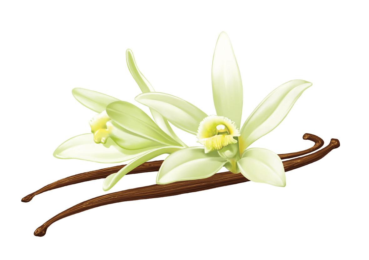 Vanilla bean clipart vector free Vanilla Clipart | Free download best Vanilla Clipart on ... free