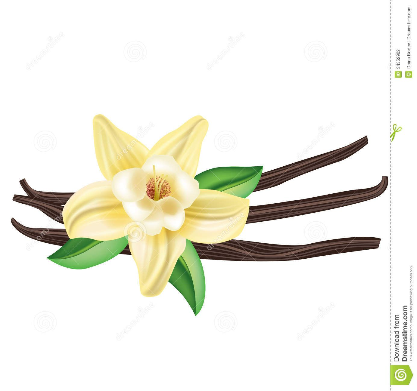 Vanilla bean clipart clipart library Vanilla Clipart Vanilla Flower Drawing Vanilla Bean Flower ... clipart library
