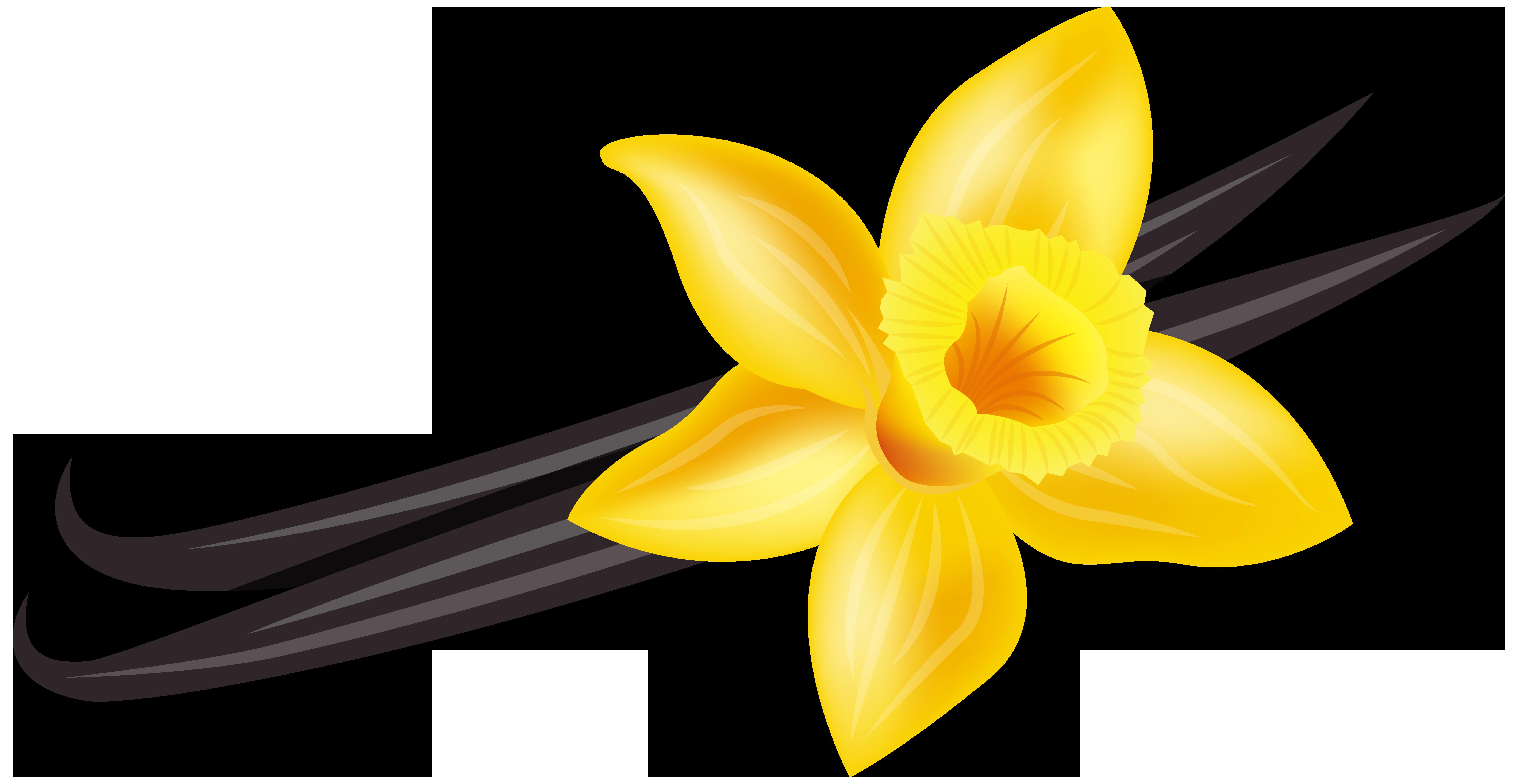 Vanilla flower clipart jpg free download 28+ Collection of Vanilla Flower Clipart | High quality, free ... jpg free download