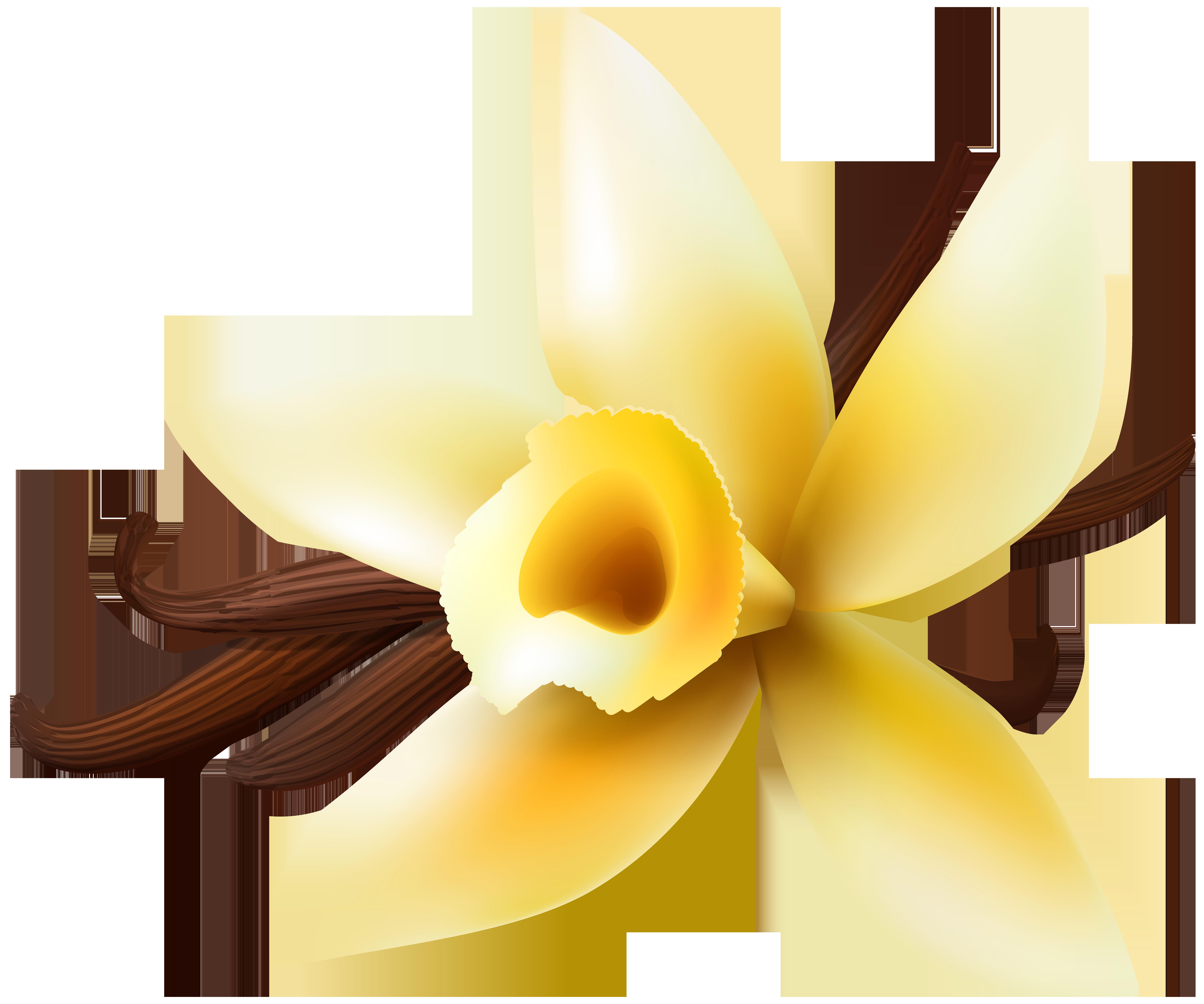 Vanilla flower clipart clip art free stock Vanilla Transparent Clip Art PNG Image | Gallery Yopriceville ... clip art free stock