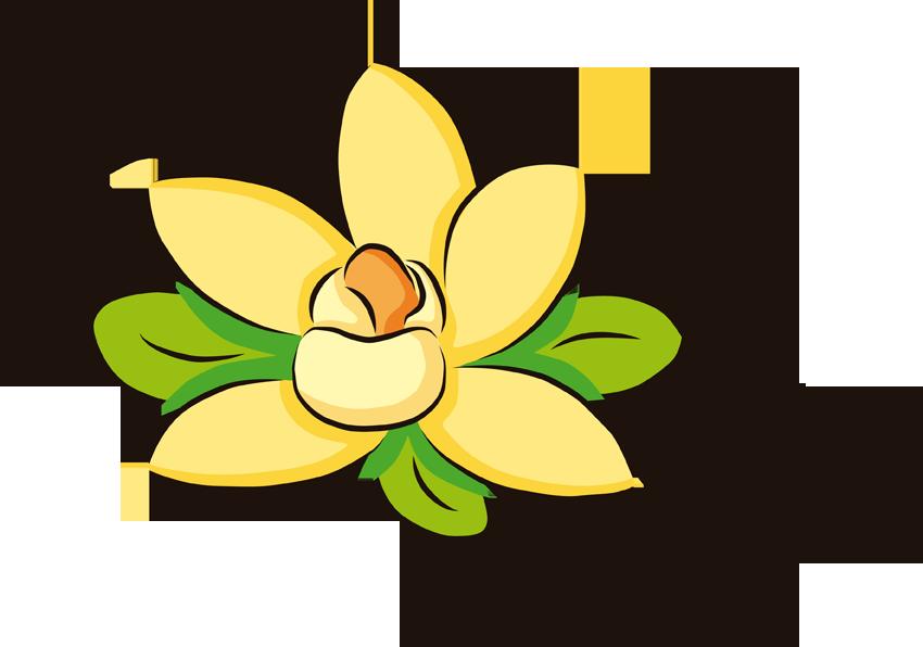 Vanilla flower clipart banner royalty free download Vanilla extract Ice Cream Cones - vanilla 850*596 transprent Png ... banner royalty free download