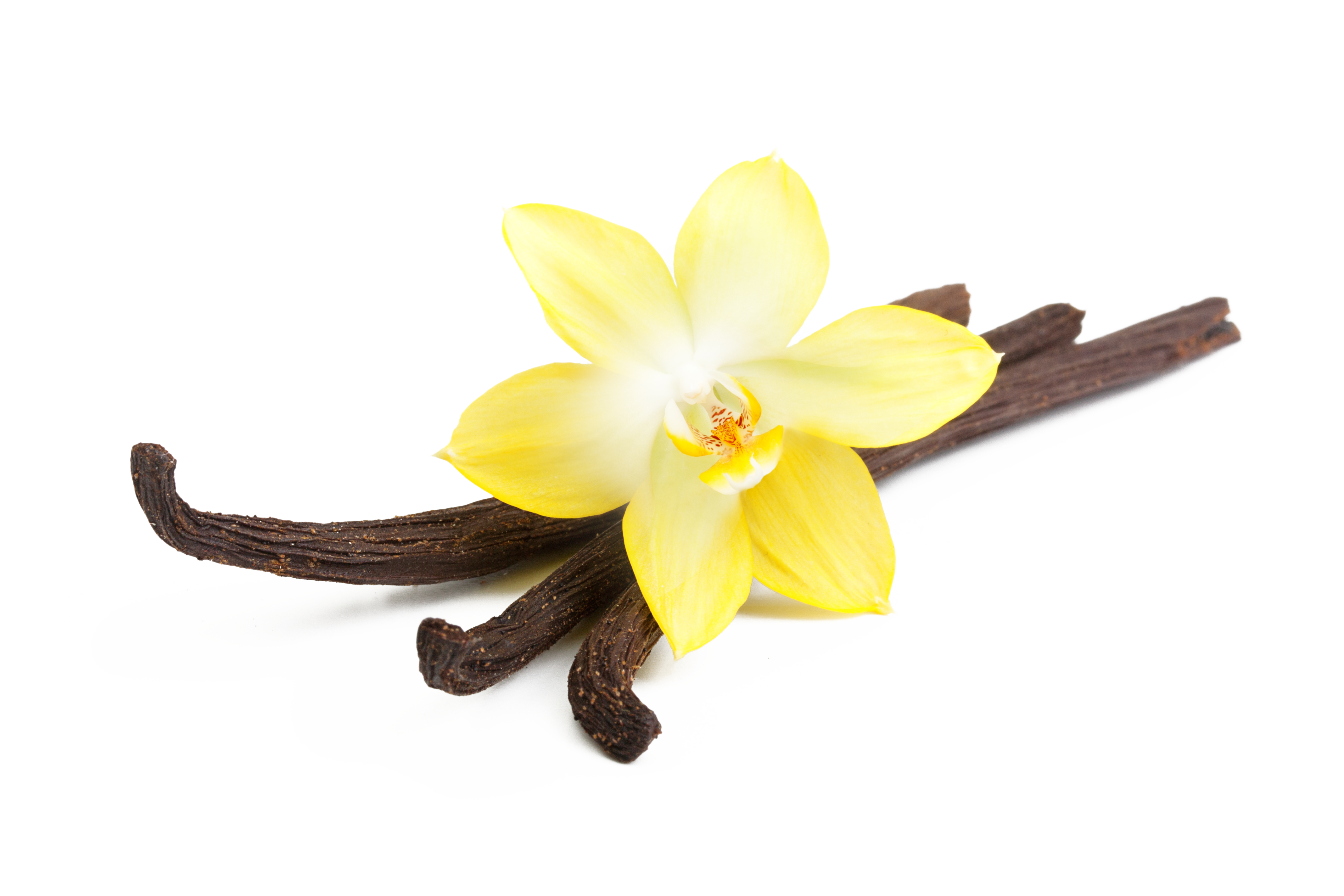 Vanilla flower clipart clip art freeuse 28+ Collection of Vanilla Clipart Transparent | High quality, free ... clip art freeuse