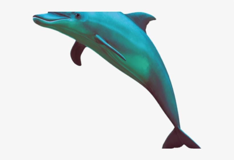 Vaporwave clipart png dolphon