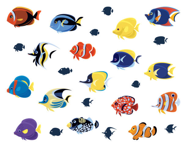 Various clipart svg royalty free download Top Angelfish Clip Art Vector Graphics And Illustrations ... svg royalty free download