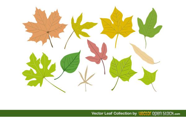 Vector art collection download jpg Free Vector Leaf Collection   Download Free Vector Art   Free-Vectors jpg
