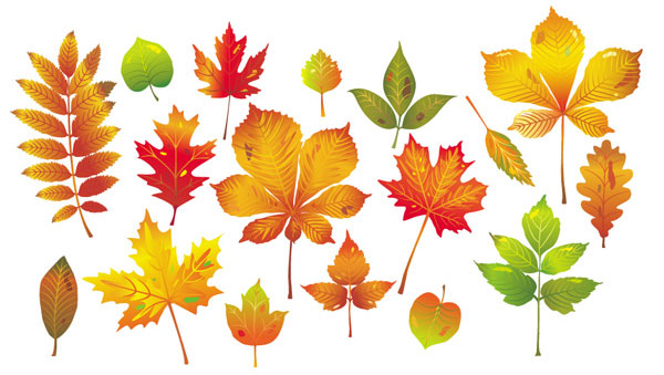 Vector art collection download jpg black and white Autumn Leaf Collection   Download Free Vector Art   Free-Vectors jpg black and white