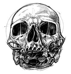 Vector beast skull jpg download Skull Drawing Beast Vector Images (64) jpg download