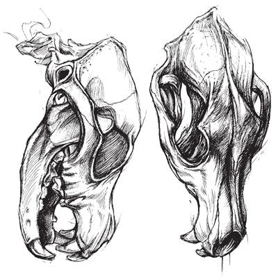 Vector beast skull svg freeuse library Dog Skull svg freeuse library