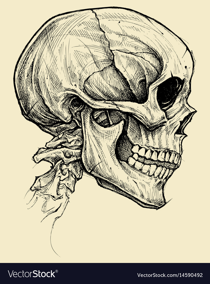 Vector beast skull banner library library Skull drawing line work vector image banner library library