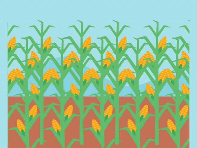 Vegetable field clipart picture download Cornfield Clipart vegetable field 3 - 450 X 353 Free Clip ... picture download
