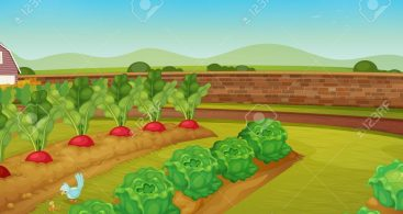 Vegetable field clipart vector graphic royalty free library Vegetable Garden Graphic Vector Archives - Free Vector Art ... graphic royalty free library