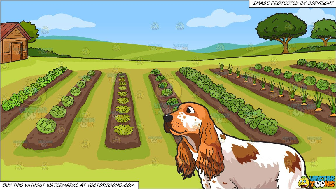 Vegetable field clipart vector jpg royalty free stock A Pretty English Cocker Spaniel and A Vegetable Garden Background jpg royalty free stock