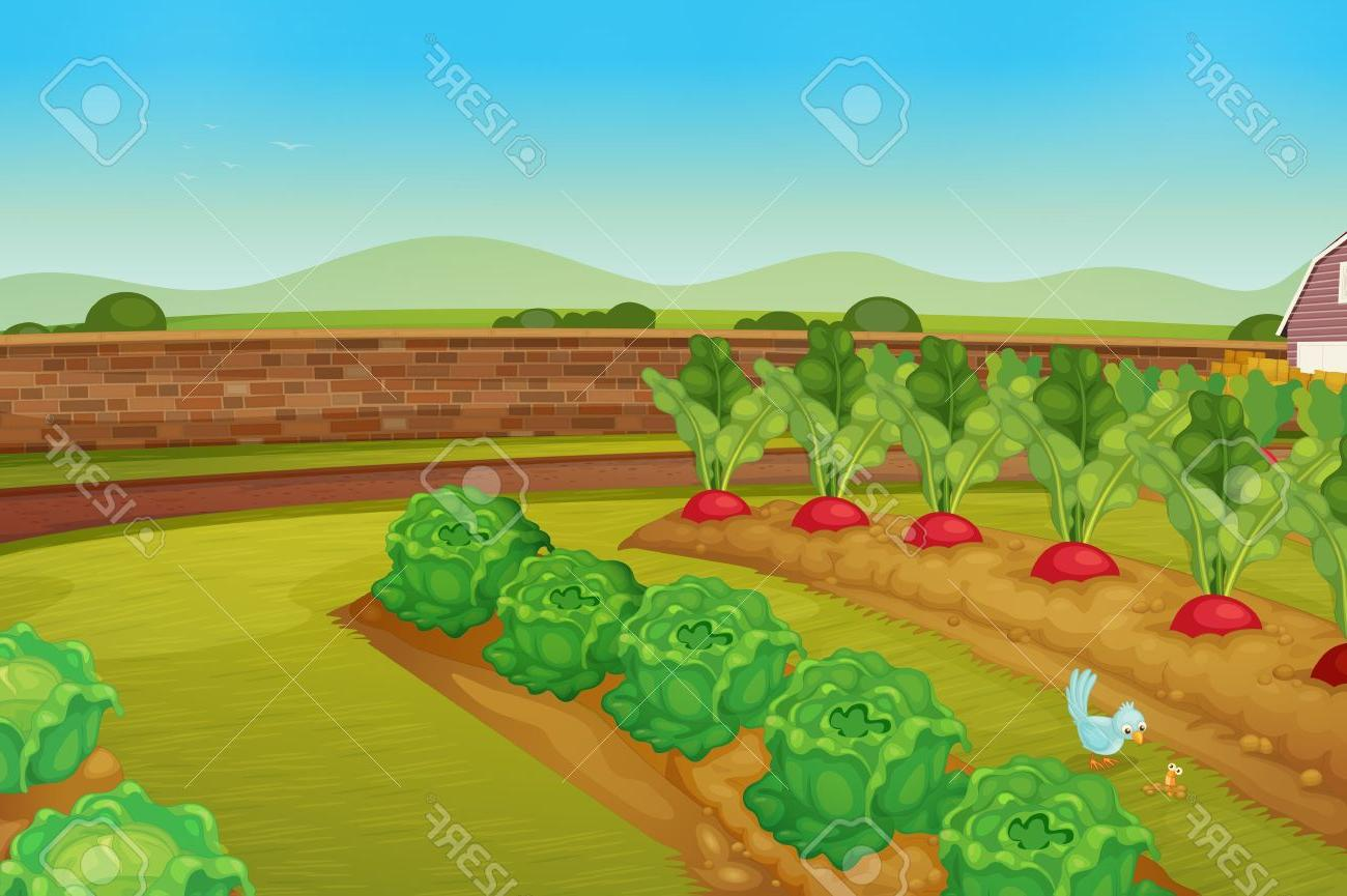 Vegetable field clipart vector vector transparent Best HD Cartoon Vegetable Garden Vector Library » Free ... vector transparent