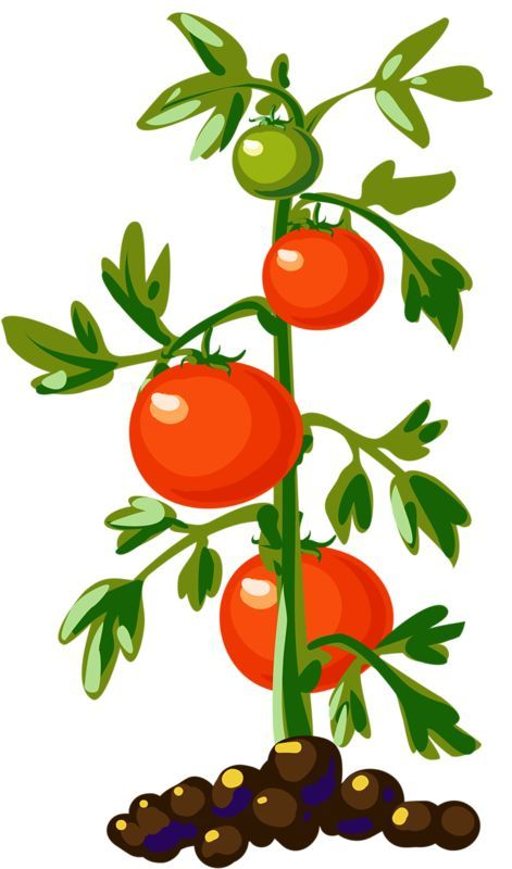 Vegetable plants clipart picture freeuse download Vegetable plants clipart 5 » Clipart Portal picture freeuse download