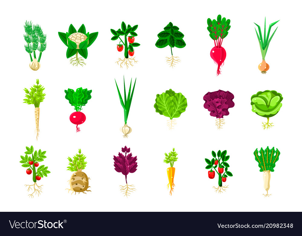 Vegetable plants clipart image black and white download Fresh vegetable plants with roots set image black and white download