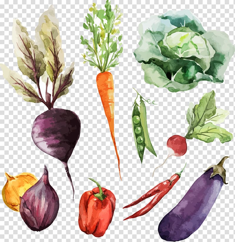 Veggies and knife clipart clip art free download Variety of vegetables illustration, Watercolor painting ... clip art free download