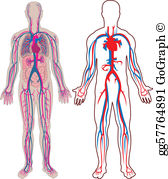 Veins clipart graphic freeuse library Veins Clip Art - Royalty Free - GoGraph graphic freeuse library