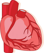 Veins clipart jpg Search Results for veins - Clip Art - Pictures - Graphics ... jpg