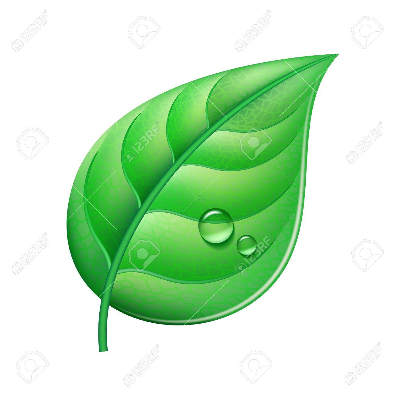 Verte clipart picture freeuse stock Clipart feuille verte » Clipart Portal picture freeuse stock