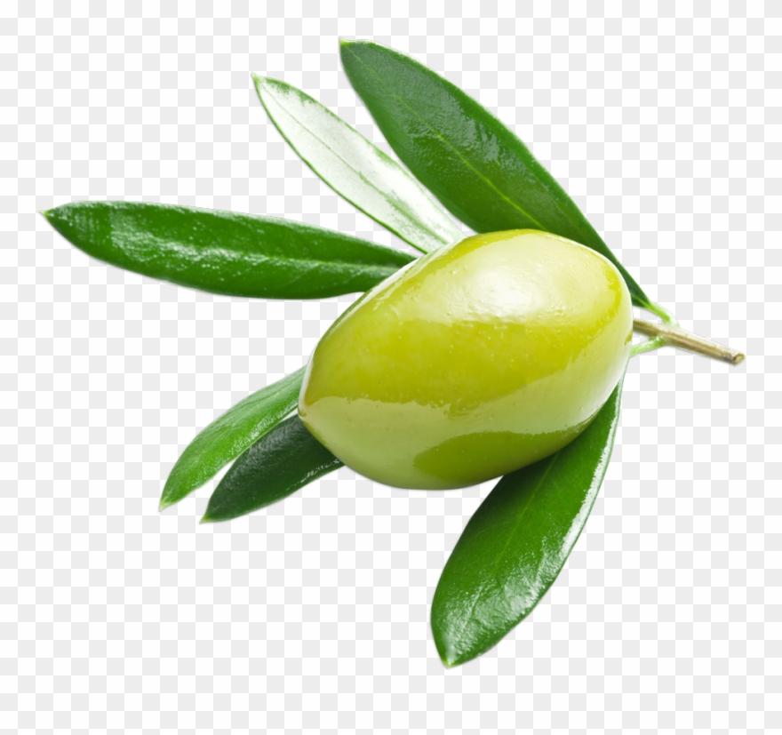 Verte clipart banner freeuse Olive Verte Clipart (#997976) - PinClipart banner freeuse