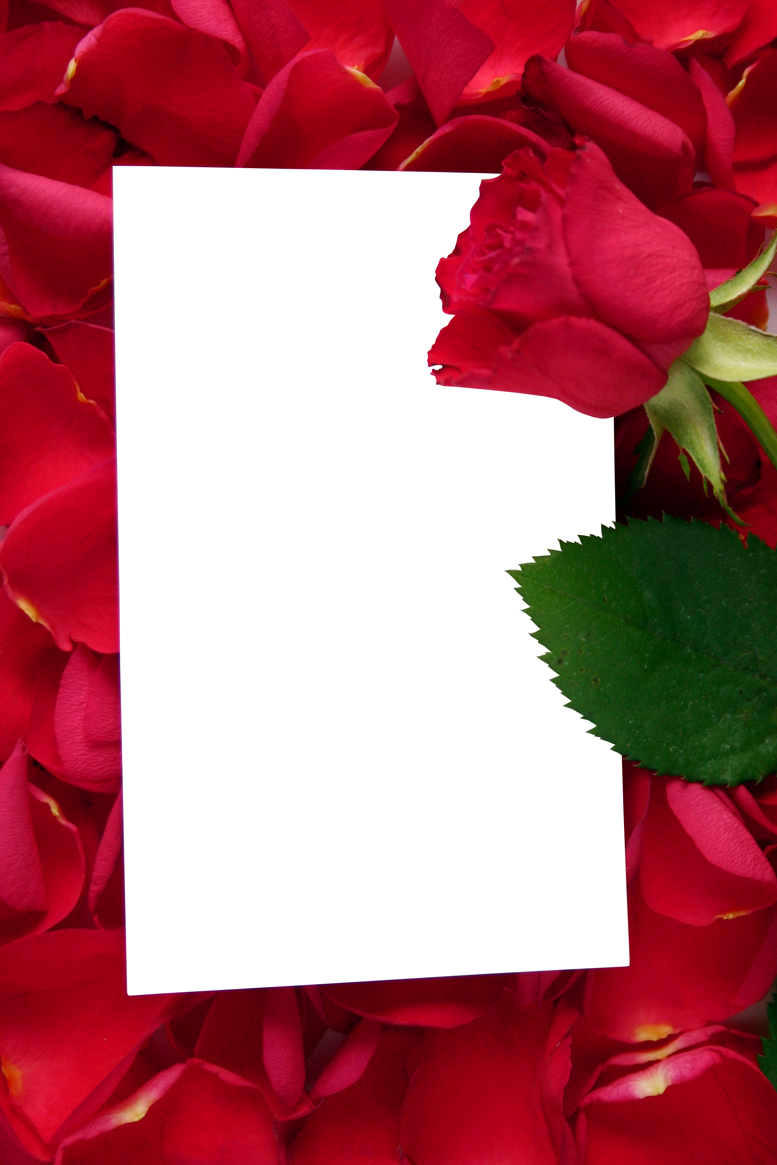 Vertical flower border clipart jpg freeuse download Large Transparent Vertical Frame with Red Roses | Gallery ... jpg freeuse download