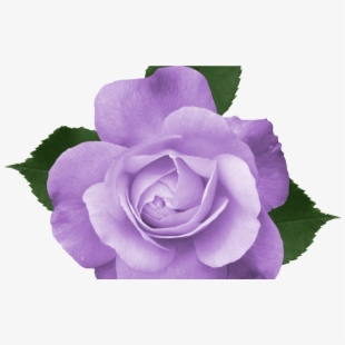 Very small vines of roses clipart lavender clip library download Purple Flower Vine Clipart Free Flowers Healthy - Beautiful ... clip library download