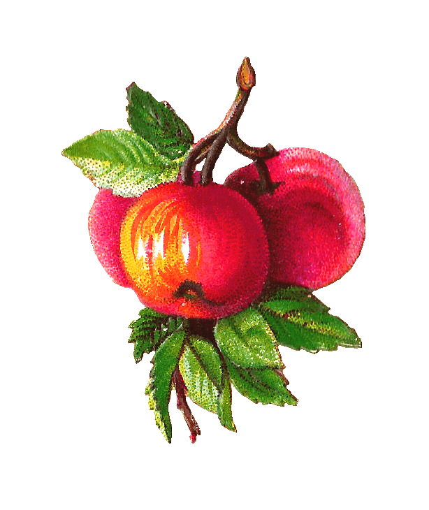 Victorian apple clipart jpg free Apples Branch Victorian Vintage transparent PNG - StickPNG jpg free
