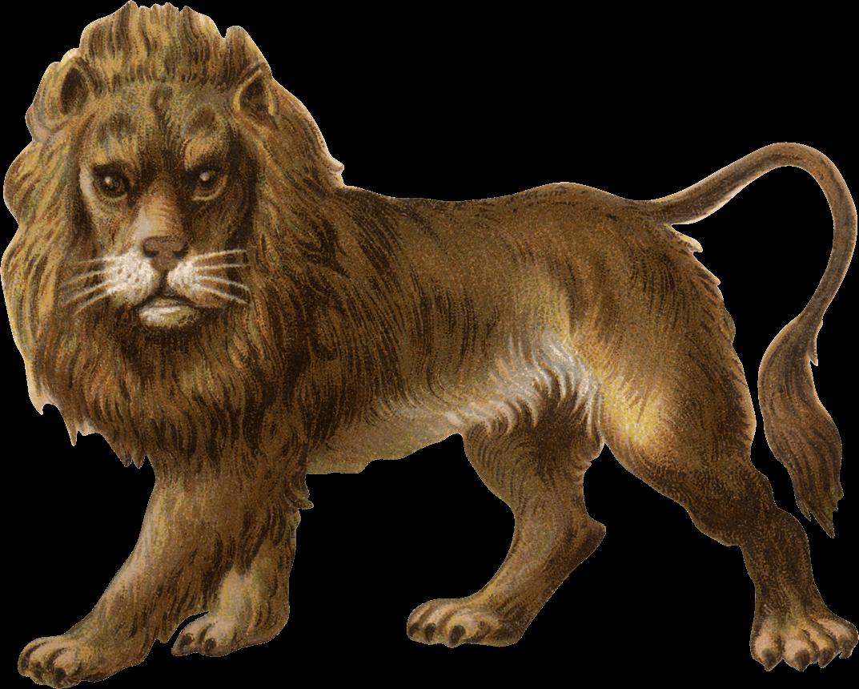 Victorian cat clipart royalty free download Victorian Vintage Lion transparent PNG - StickPNG royalty free download