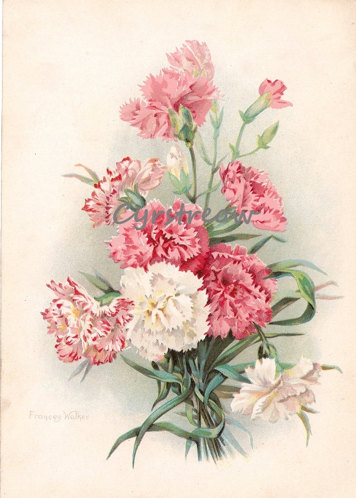 Victorian floral images image black and white 1000+ images about Tattoo ideas on Pinterest | Flora, Victorian ... image black and white