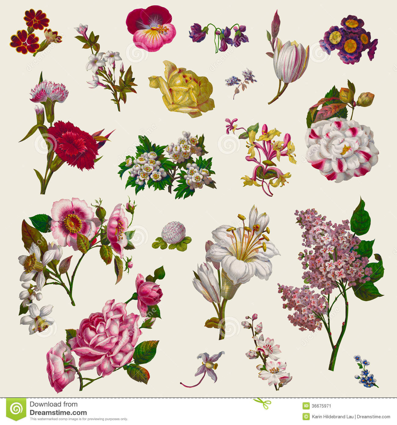 Victorian floral images png transparent download Vintage Victorian Flowers Clip Art Stock Image - Image: 36675971 png transparent download