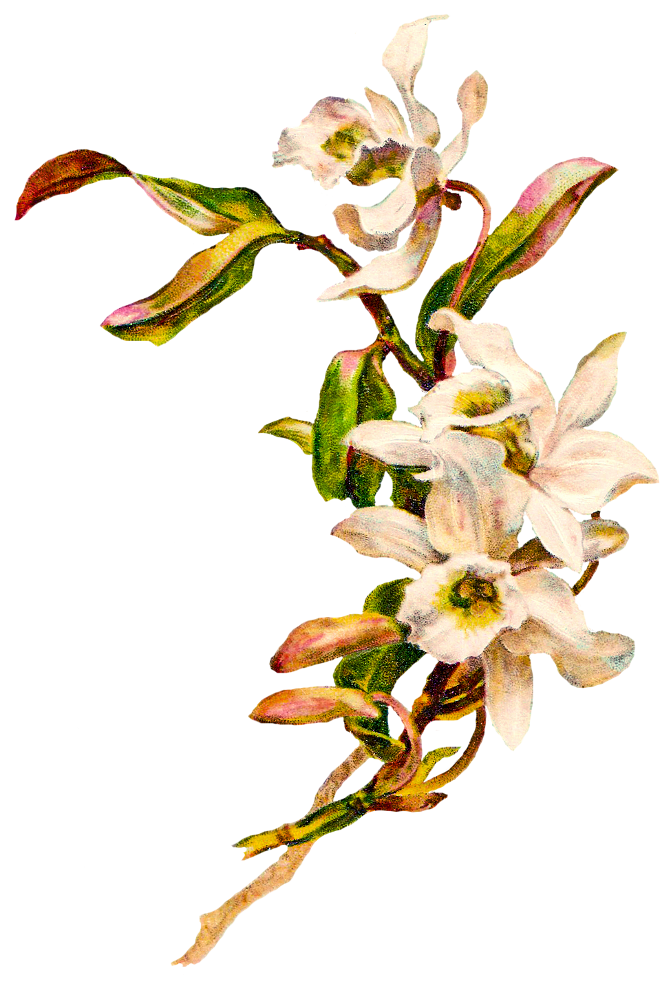 Victorian flower clipart png free victorian flowers - Поиск в Google | карточки, теги, картинки для ... png free