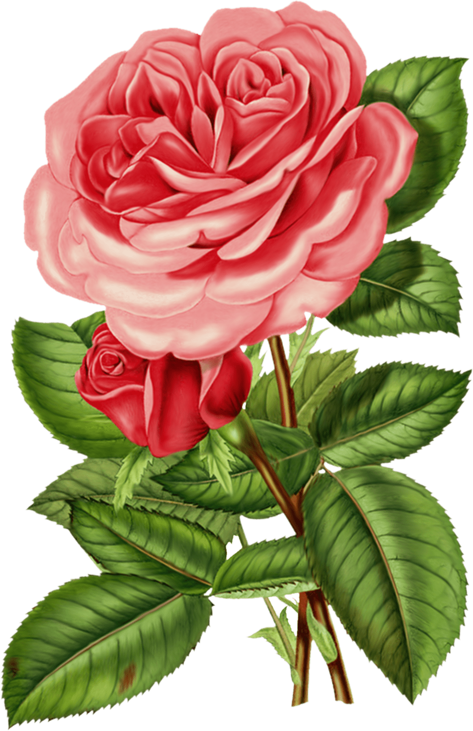 Victorian flower clipart clipart library download Victorian Pink Rose Clipart clipart library download