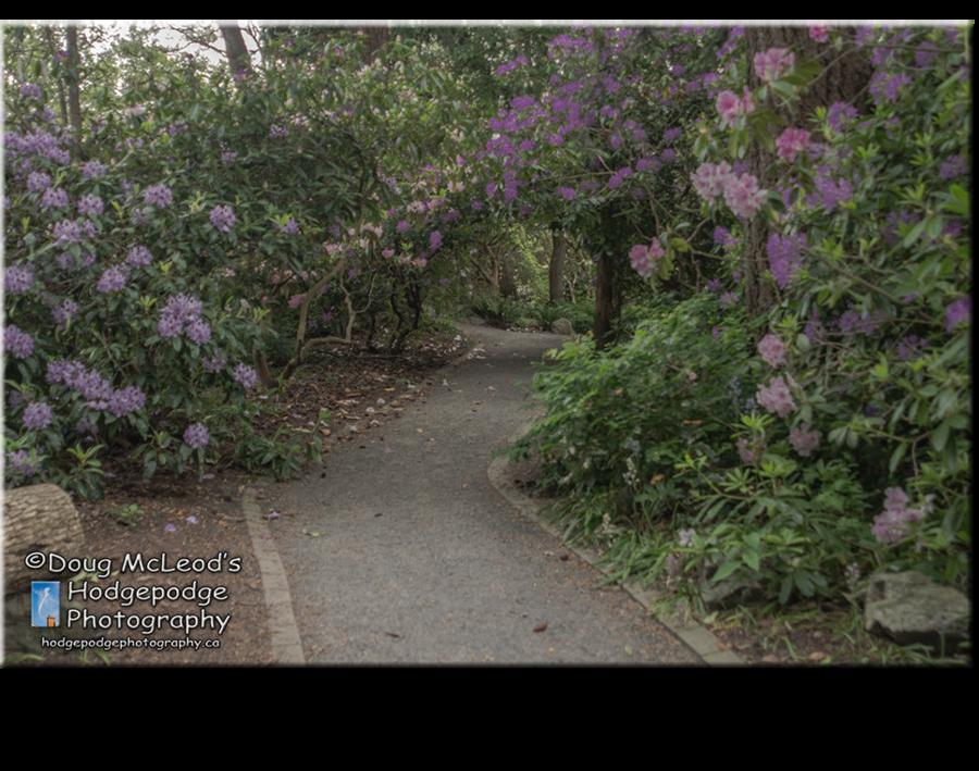 Victorian garden clipart park clipart banner black and white stock Flower, Plant, Garden, transparent png image & clipart free ... banner black and white stock