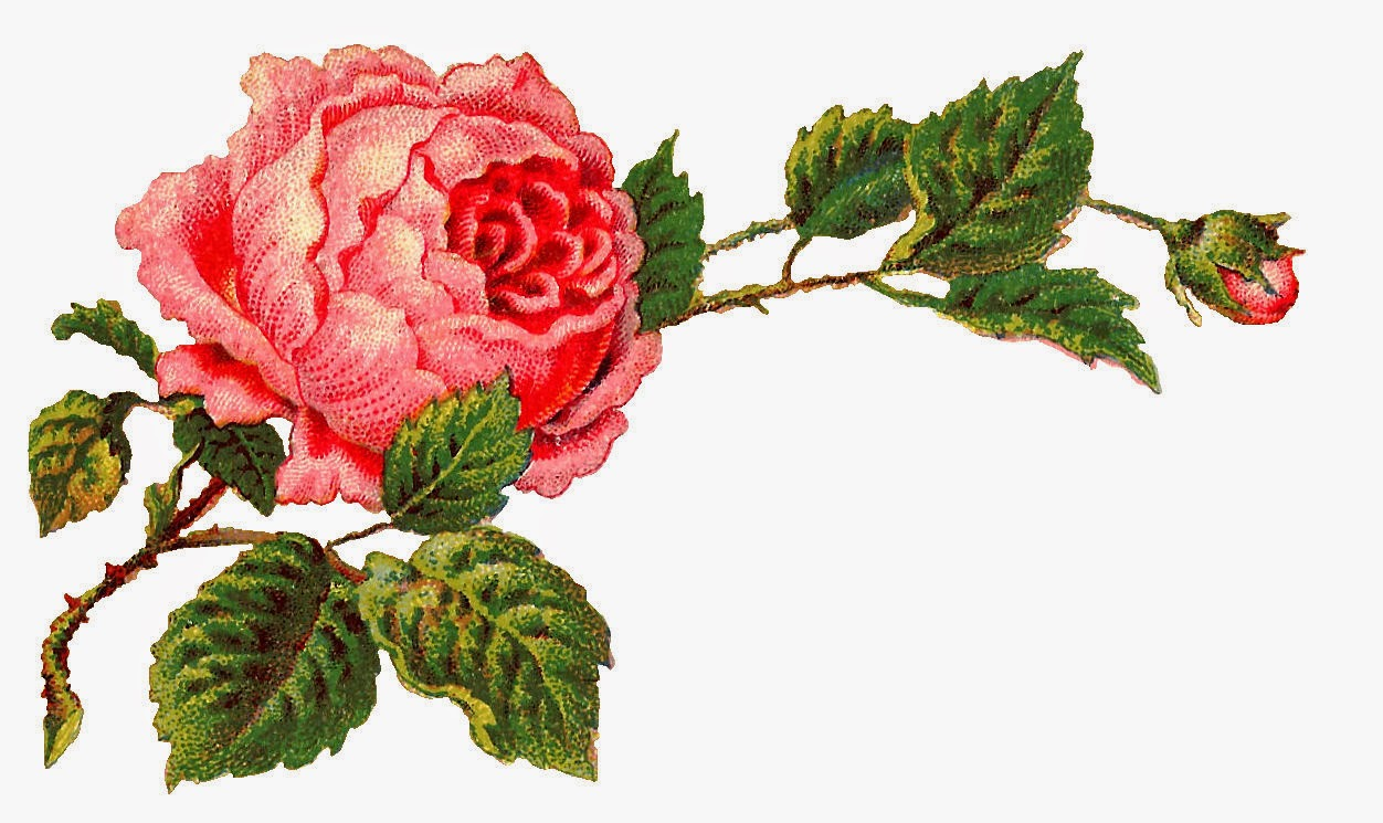 Old roses clipart clipart freeuse library Victorian Rose Pictures | Free download best Victorian Rose ... clipart freeuse library