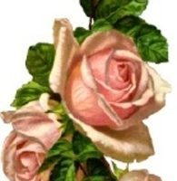 Victorian rose clipart picture royalty free Victorian rose clipart 5 » Clipart Portal picture royalty free