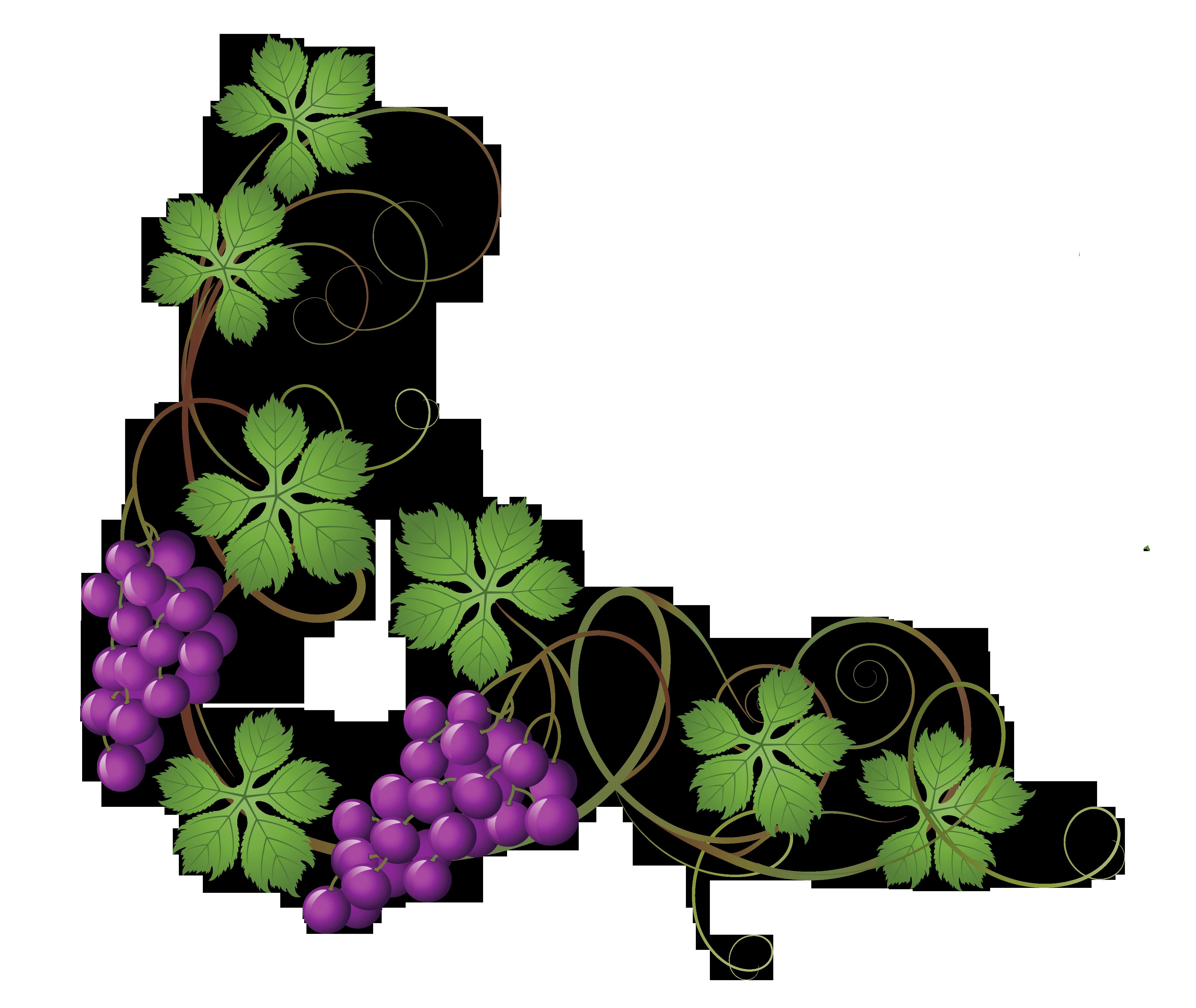 Vine flower clipart clipart black and white stock Transparent_Vine_Decoration_PNG_Clipart_Picture.png (4340×3658 ... clipart black and white stock