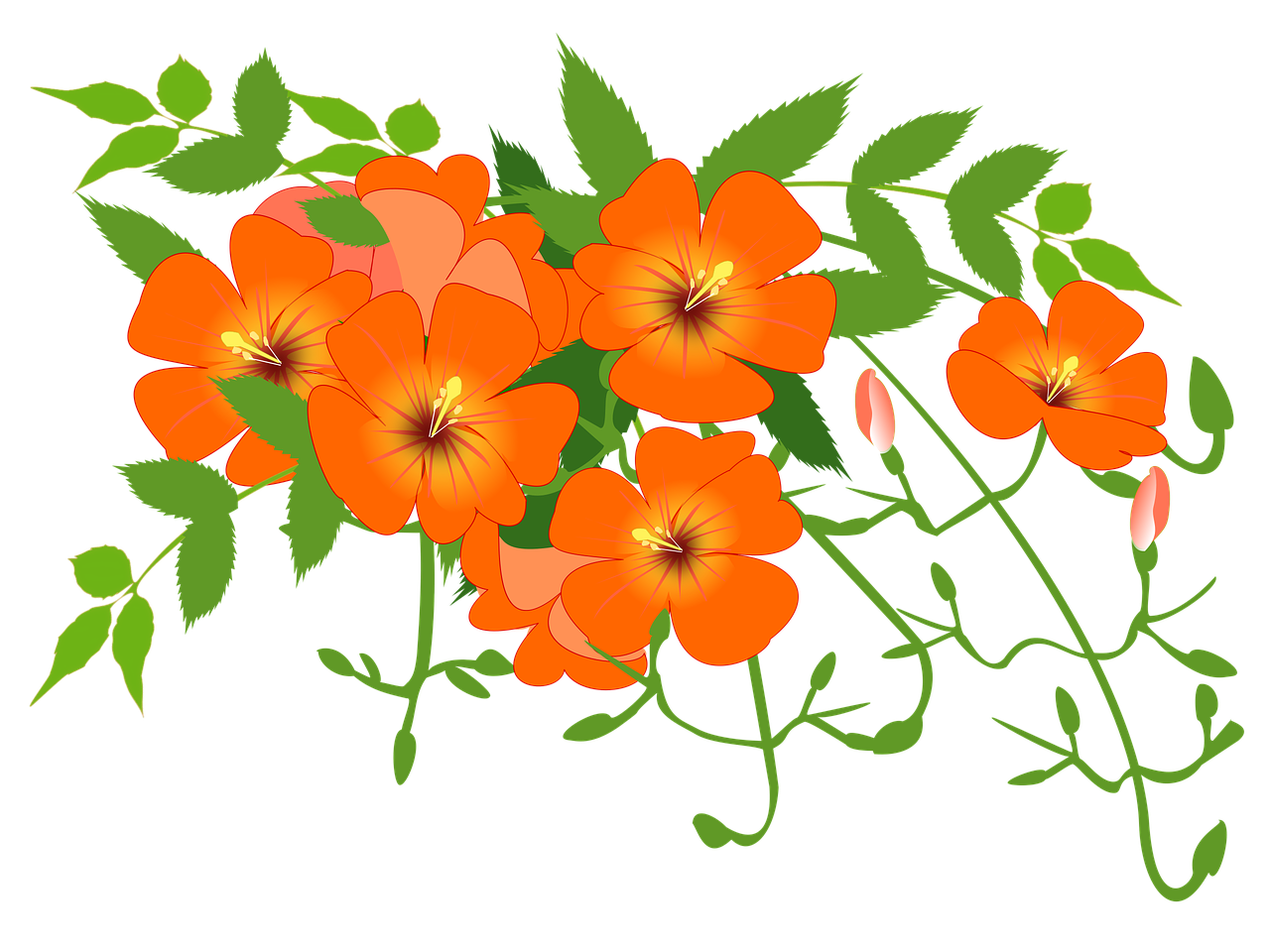 Vine flower clipart clip stock Chinese Trumpet Vine Flower Vine PNG Image - Picpng clip stock