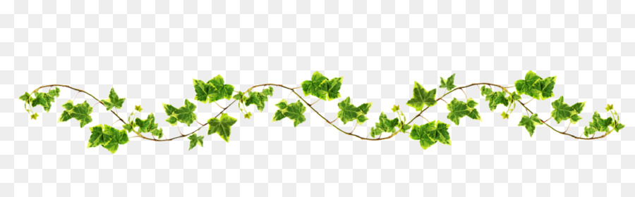 Vines png clipart vector transparent stock Family Tree Drawing png download - 2038*625 - Free ... vector transparent stock