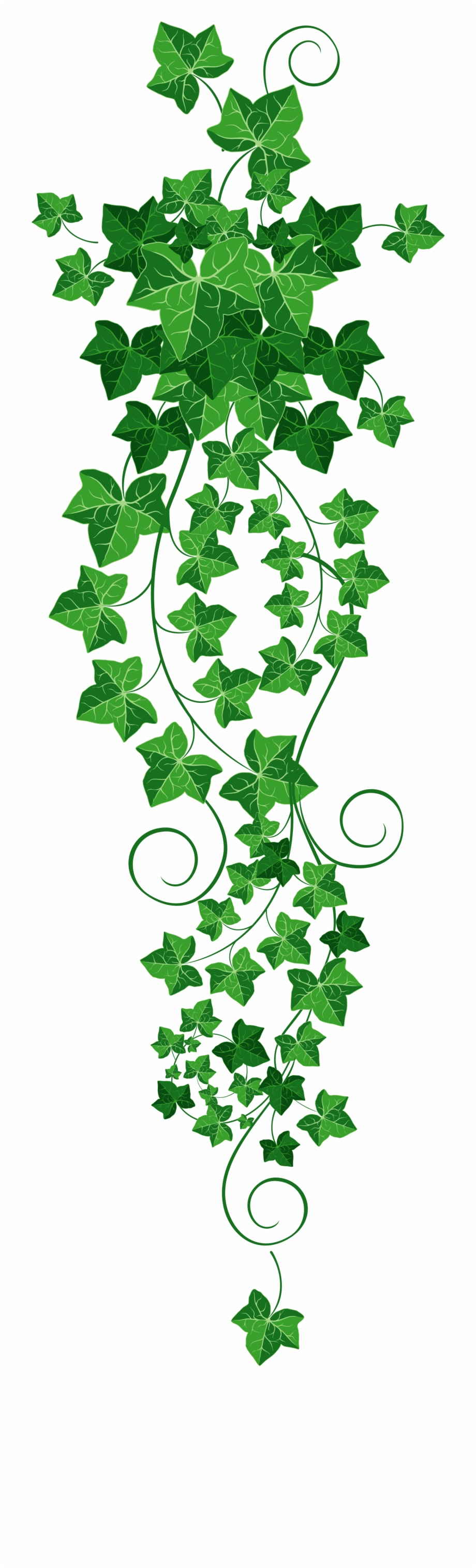 Vine png clipart picture black and white library Free Ivy Vine Png, Download Free Clip Art, Free Clip Art on ... picture black and white library
