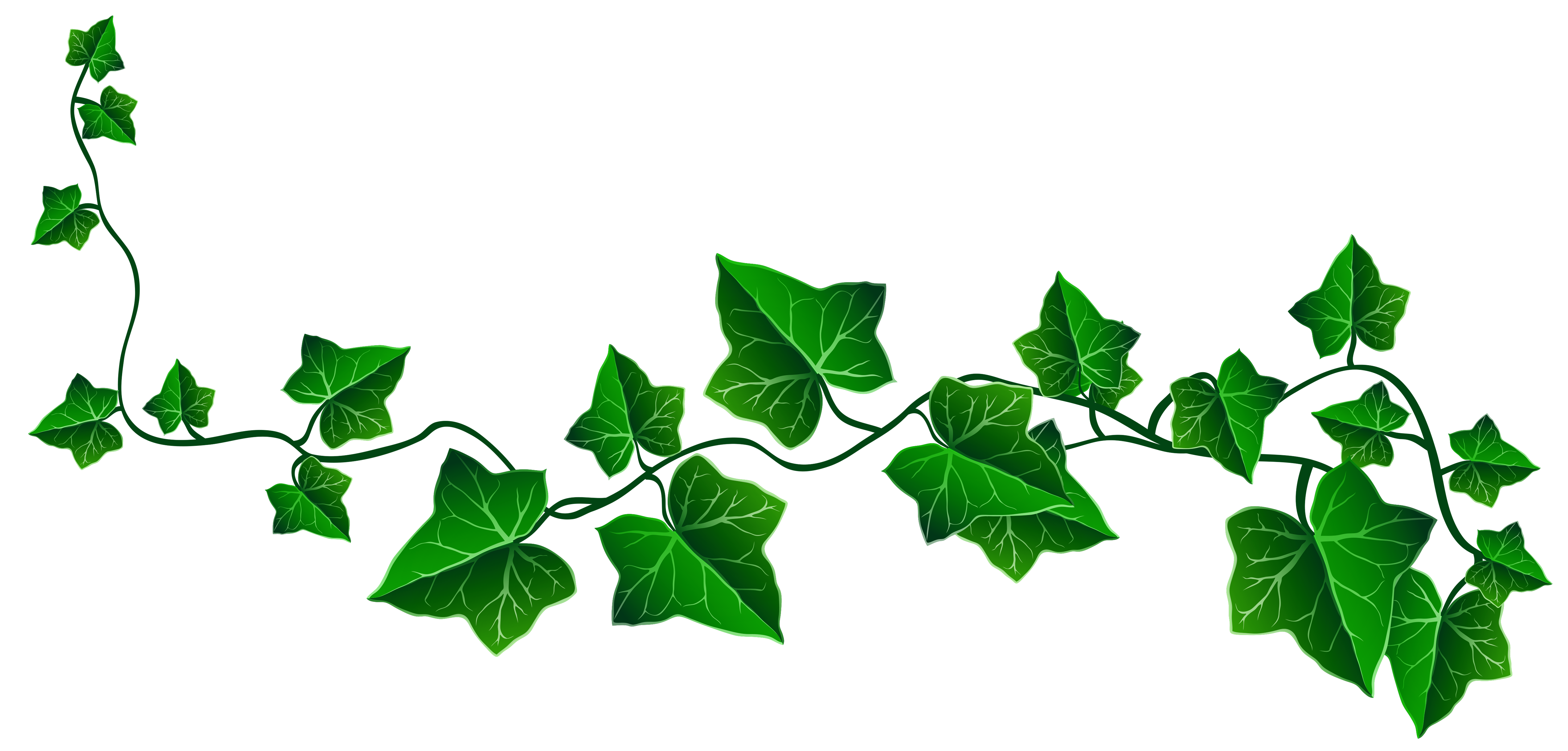 Ivy border clipart free picture royalty free stock Vine Ivy Decoration PNG Clipart Picture | Gallery ... picture royalty free stock