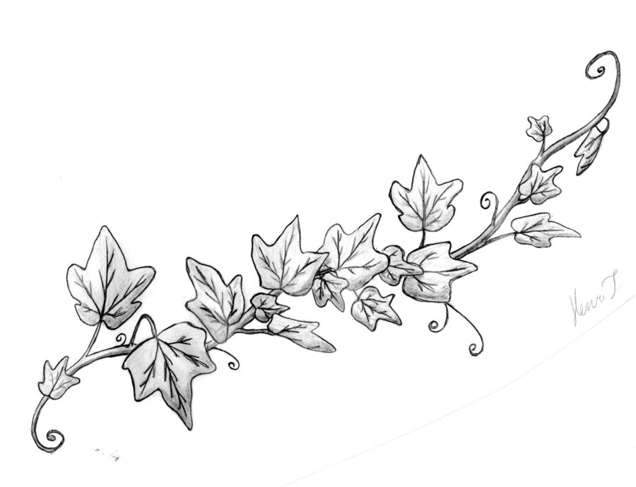 Vine sketch clipart jpg freeuse stock Free Rose Vines Drawings, Download Free Clip Art, Free Clip ... jpg freeuse stock