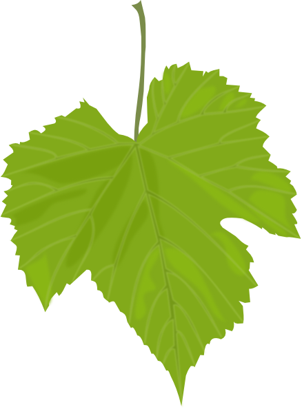 Vines leaf clipart vector library Grape Vine Leaves Clip Art | Grape Leaf clip art | Betty ... vector library