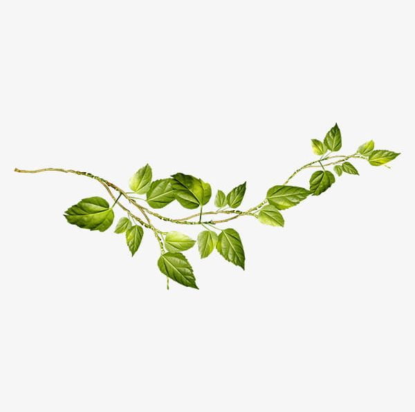Vines png clipart transparent library Creative Green Vines PNG, Clipart, Branch, Branches ... transparent library