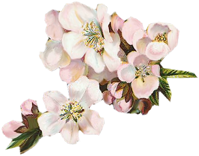 Vintage apple blossom page divider clipart png free stock Paper Crafts – Vintage Pieces for Collage/Altered Art – Spring Apple ... png free stock